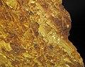 Gold vein stockwork in limonite (Gold Flake Vein, Farncomb Hill, near Breckenridge, Colorado, USA) 4 (16891736838).jpg