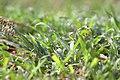 Grass IMG 7682.jpg