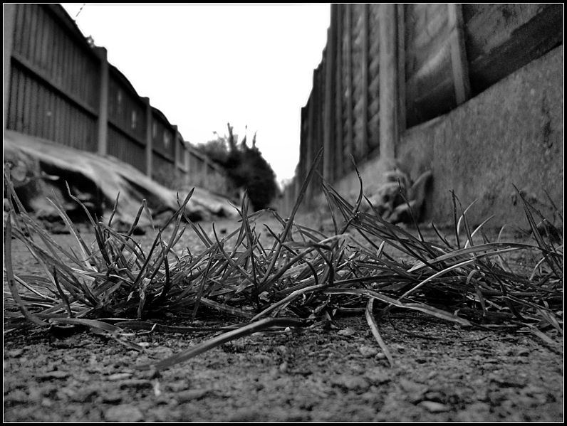 File:Grass in the alleyway ! (6935064172).jpg