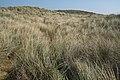 Grasses, Manchester Beach (3089403600).jpg