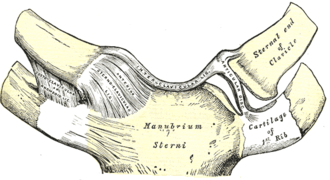 Costoclavicular ligament - Sternoclavicular articulation. Anterior view. (Costoclavicular labeled at far left.)