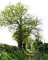 Green Lane - geograph.org.uk - 1293710.jpg