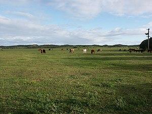 Greenough, Western Australia - Green fields of Greenough
