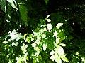Greenwood forest farming 03.JPG
