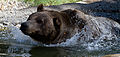 Grizzly Bear 2 (7974451226).jpg