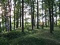 Grodzisko w Bolesławcu.jpg