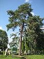 Guntauninkai 30172, Lithuania - panoramio (4).jpg