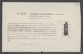 Gynandropus - Print - Iconographia Zoologica - Special Collections University of Amsterdam - UBAINV0274 011 04 0022.tif