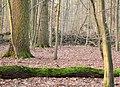 Hämelerwald Eichen.jpg