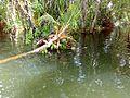 Half Sunk coconut tree.jpg