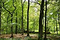 Hambacher Forst bei Morschenich DE 2018-09-09 B.jpg