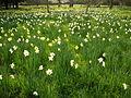 Hampton Court Palace Gardens 02 TTaylor05.JPG