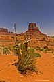 Harsh Environment Monument Valley.jpg