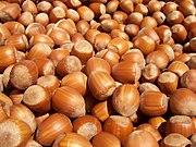 Hazelnuts from the Common Hazel