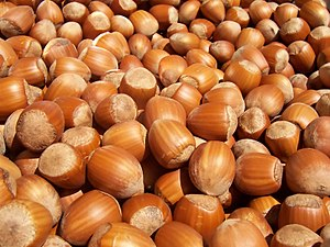Lots of hazelnuts