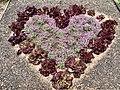 Heart symbol from lettuce.jpg