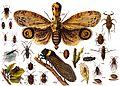 Hemiptera Übersicht.jpg