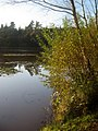 Hensol forest lake wales near welsh st donets - panoramio.jpg