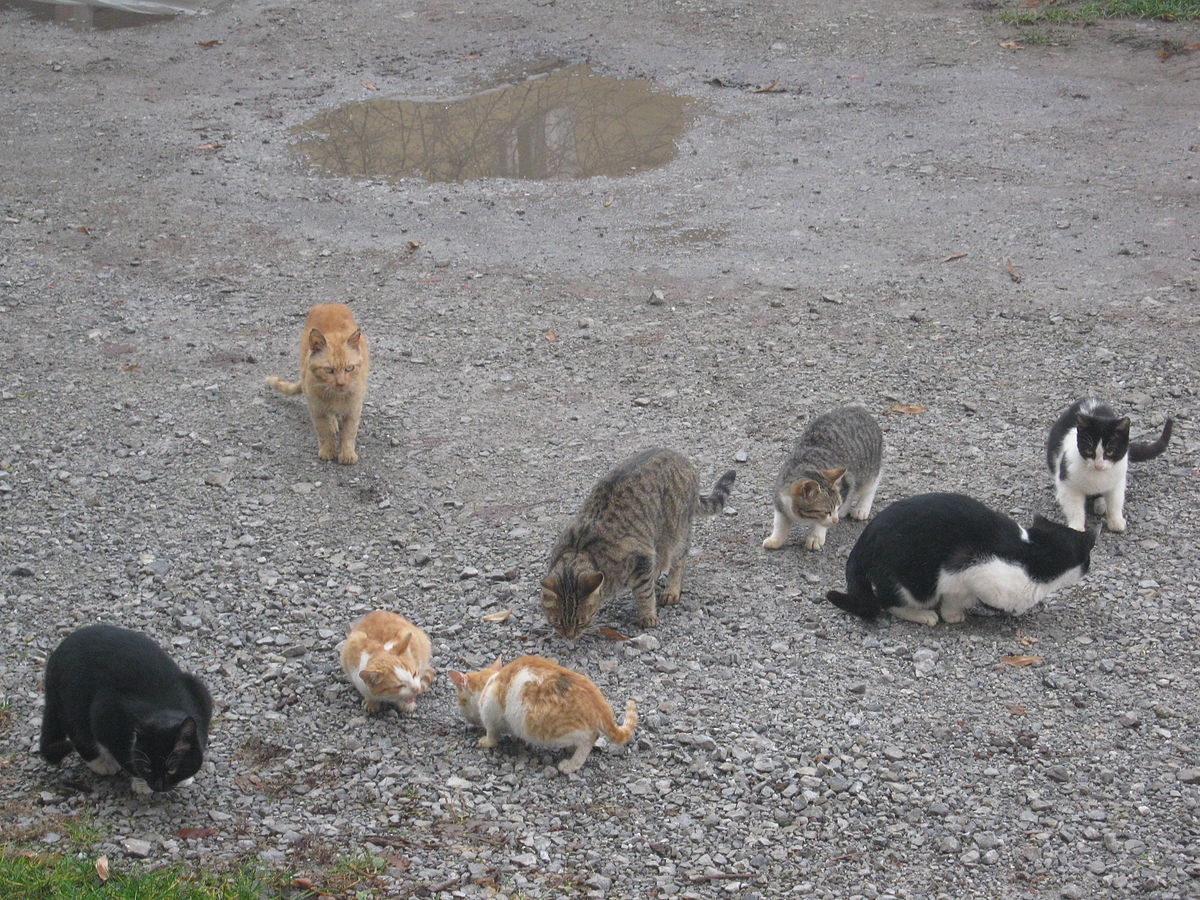 Herd of Cats.jpg
