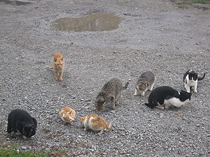Feral cat - A colony of feral cats
