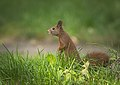Hiding in grass (23656914448).jpg