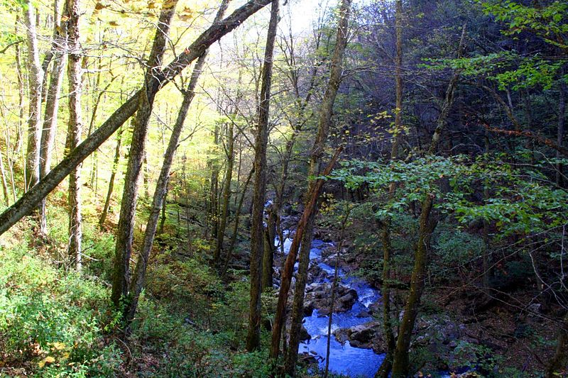 File:Hills creek gorge - West Virginia - ForestWander.jpg