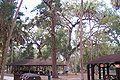 Hillsborough River State Park picnic area 2.jpg