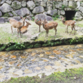 Hiroshima Prefecture, Deer Portrait.png