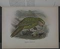 History of the birds of NZ 1st ed p026-2.jpg