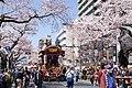Hitachi Sakura Festival, Ibaraki 01.jpg