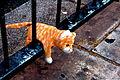 Hobbes (535636574).jpg