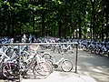 Hoge Veluwe free bikes2.jpg
