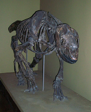 Homalodotherium - Mounted skeleton of Homalodotherium cunninghanni in the Field Museum of Natural History, Chicago