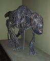 Homalodotherium cunninghami.jpg