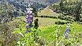 Huari Province, Peru - panoramio.jpg