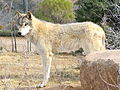 Hugry like the wolf 2012.JPG