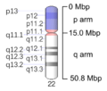 Human chromosome 22 - 550 bphs.png