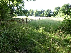 Hutchison's Meadow 1.jpg