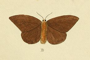 Description de l'image Hylesia metabus Cramer&Stoll-uitlandsche kapellen vol. 1- plate 074.jpg.