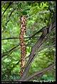 Hymenoptera (6022580182).jpg