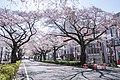 Ibaraki Prefectural Route-293 08.jpg