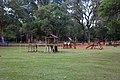 Ibirapuera Park, São Paulo 2018 087.jpg