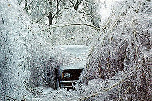 Ice storm - Devastation caused by an ice storm