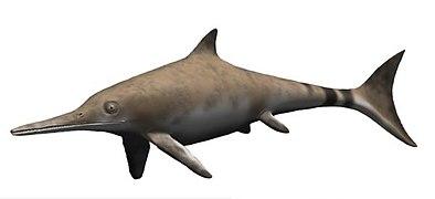 Ichthyosaurus BW