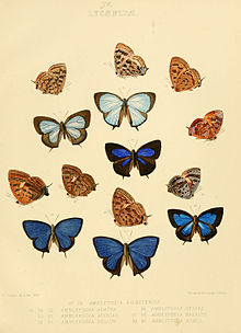 Illustrations of diurnal Lepidoptera British Museum Catalogue IV.jpg