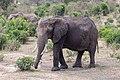 Impressions of Serengeti (137).jpg