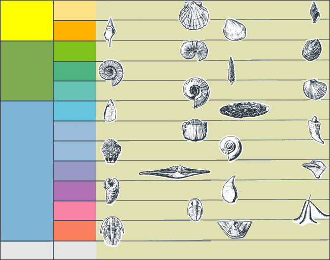 Common index fossils used to date rocks in North-East USA.