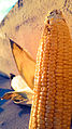 Indian sweet corn 2.jpg