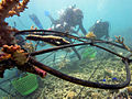 Installing Biorcok reef.jpg