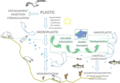Interactions between marine microorganisms and microplastics.webp